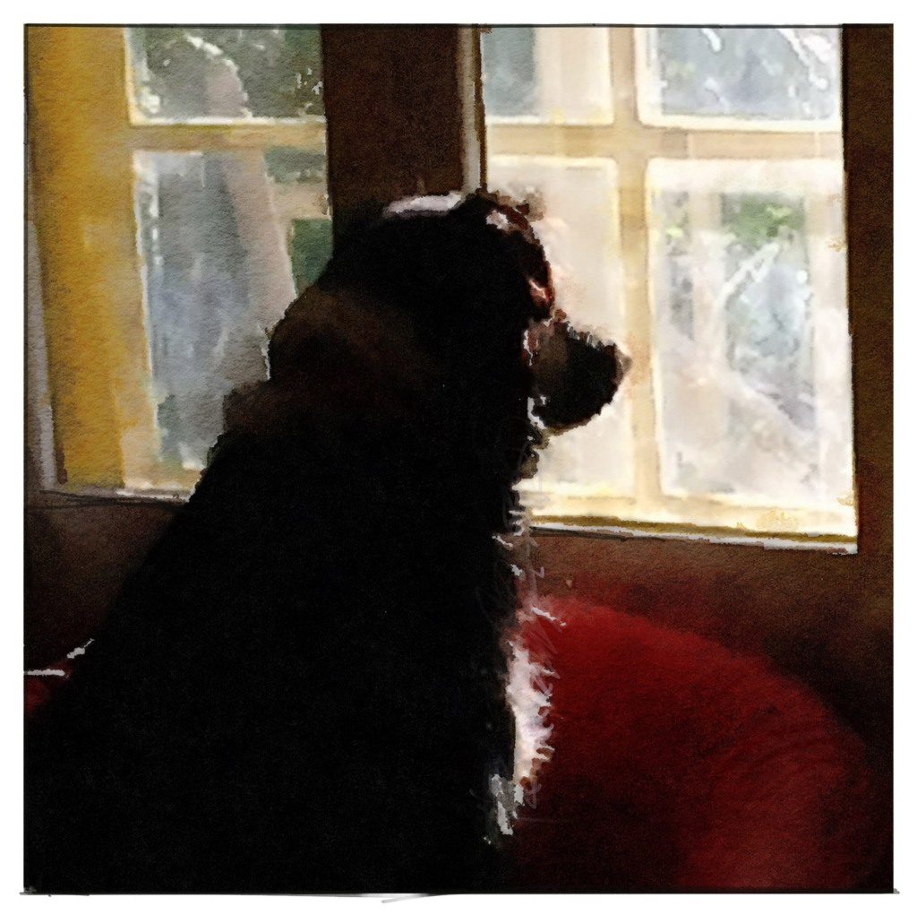 dog waiting at a sunny window