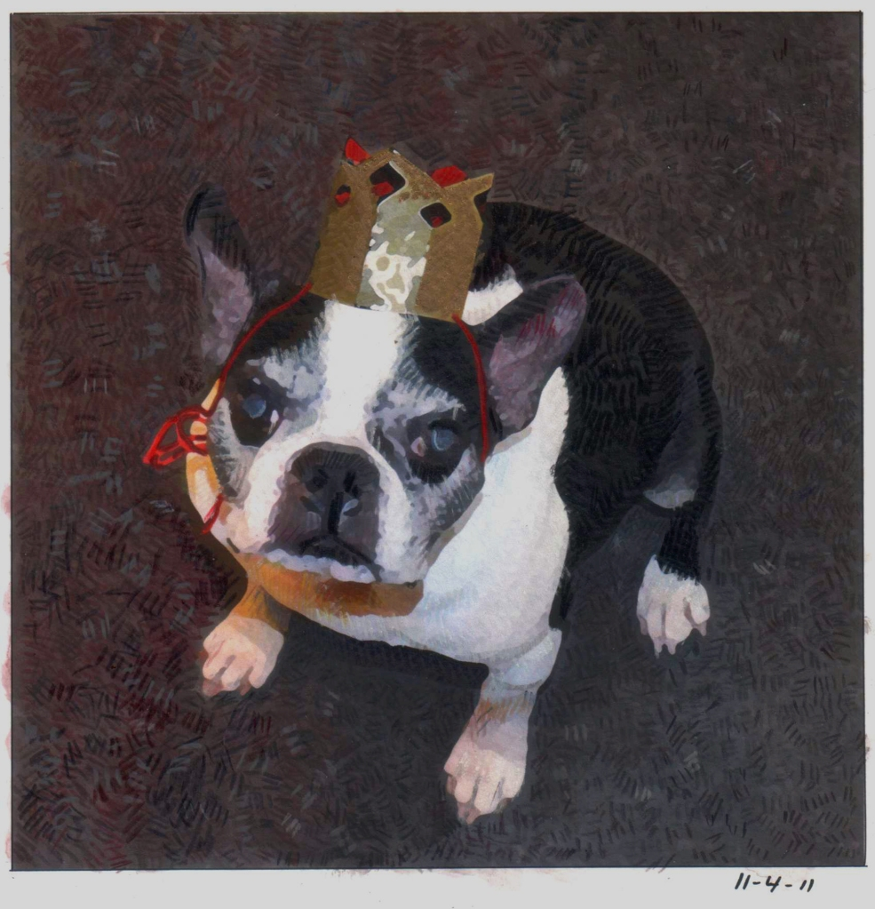 Boston Terrier with crown