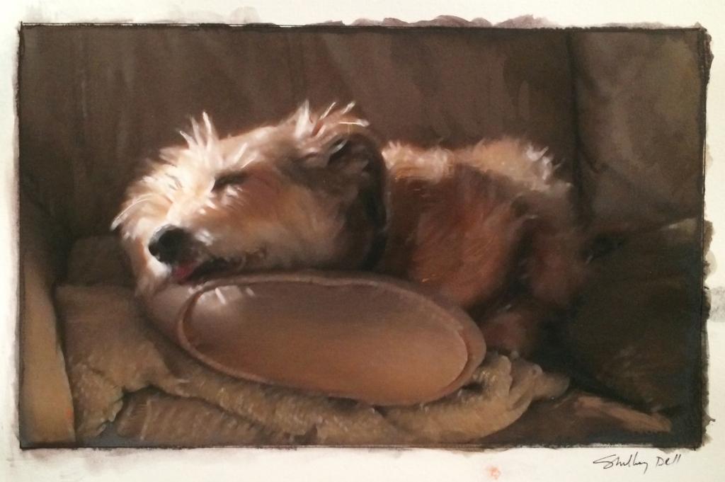 sleeping furry terrier