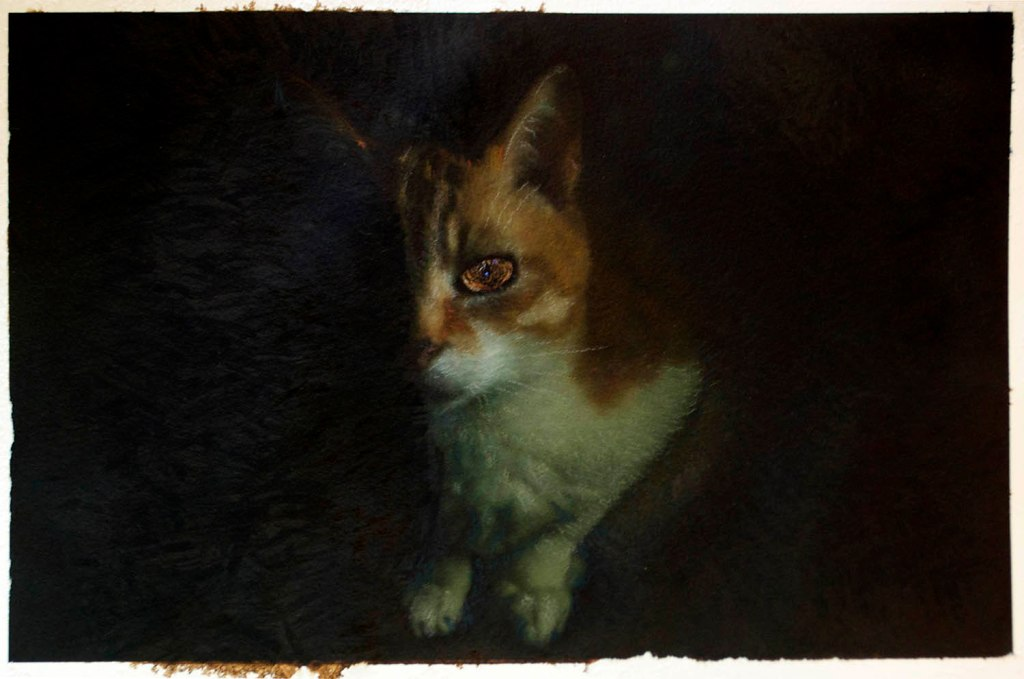 orange and white cat in the dark