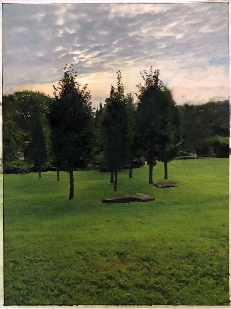 trees at Innisfree garden early morning light