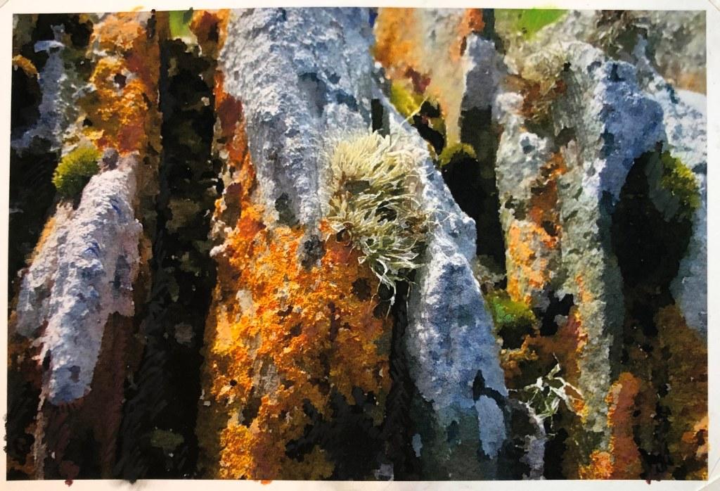 Shetland Lichen